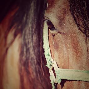 Eye of Beauty by Christy Julian - Animals Horses ( horse, animal )