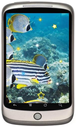 Fish Exotic Top live wallpaper