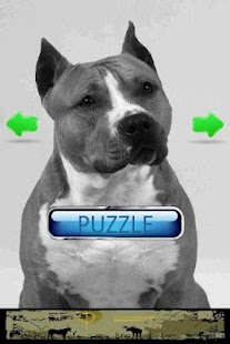 Dog Puzzle: American Staffords- screenshot thumbnail