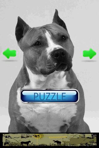 Dog Puzzle: American Staffords- screenshot