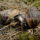 Caracol. Snail