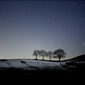 four trees by Melchiorre Pizzitola - Landscapes Starscapes ( night / trees /star /landscape,  )