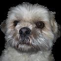 Dog Keeper icon