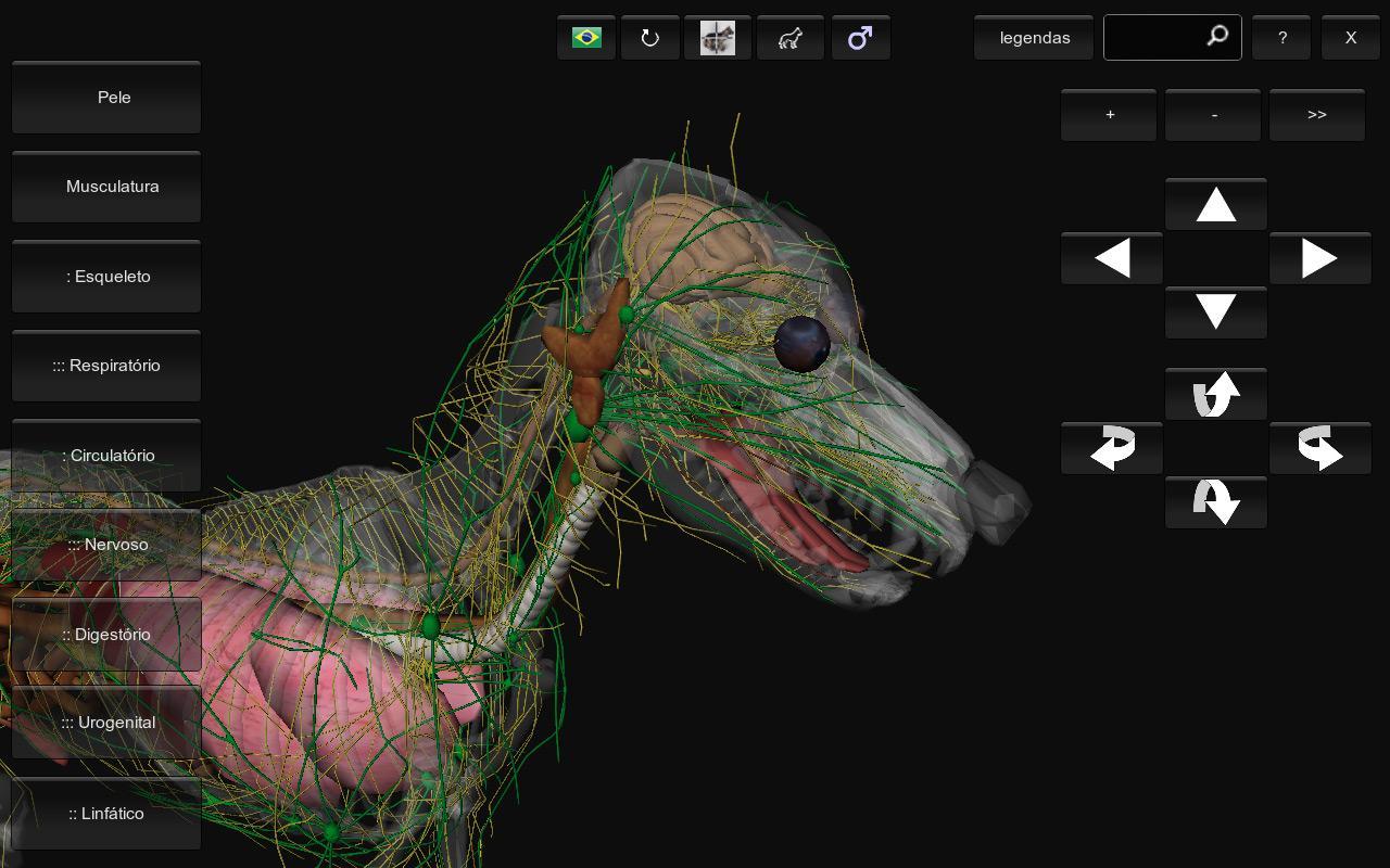 Virtual dog anatomy