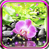 Orchid Gallery live wallpaper