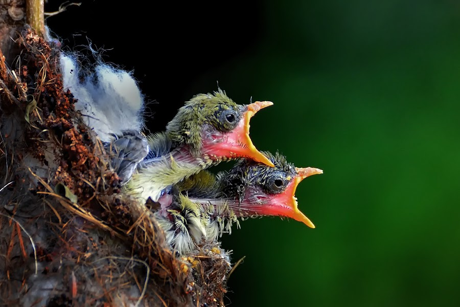 It's my turn.. by Dikky Oesin - Animals Birds