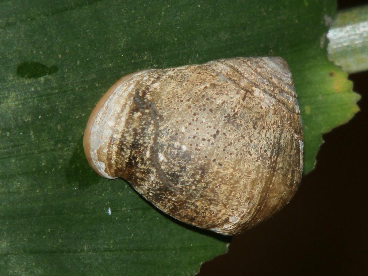 Trigonal Pythia