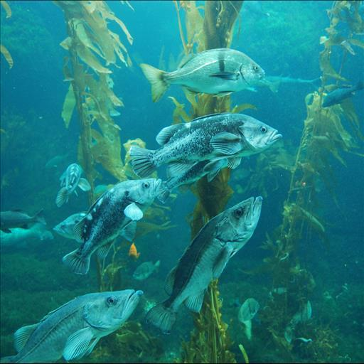 無料个人化Appの水族館アニメ壁紙|記事Game