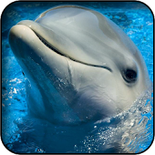 Cute Dolphin Wallpapers