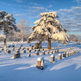High Street Cemetery by David Stone - City,  Street & Park  Cemeteries ( headstones in snow, morning light, ipswich, snow, cemetery, trees, sunrise, , winter, cold )