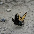 Butterfly Standoff