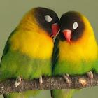 craZ4birds425