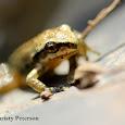 Backyard Wildlife Around the World