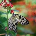 Ricepaper Butterfly