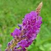 Wild flower~