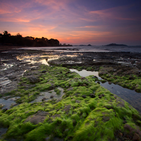 Mossy rocks by Einto R - Landscapes Beaches