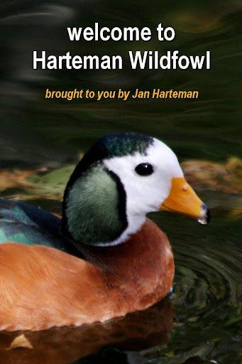 Harteman Wildfowl waterbirds