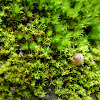 Snail on mosses !