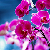 Orchids HD Live Wallpaper
