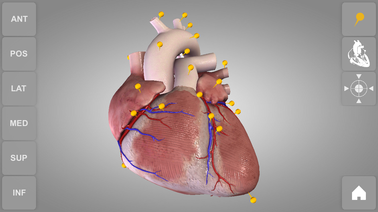 Download Heart 3D Anatomy Lite APK latest version app for android ...