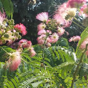Pink flowers by Aleksa Stankovic - Flowers Flowers in the Wild ( flower )