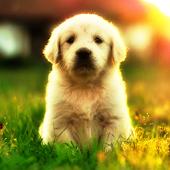 Yavru Köpek Videoları