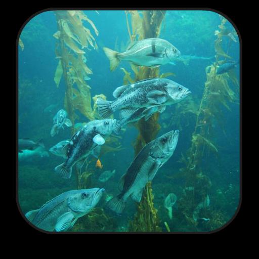 个人化の水族館アニメ壁紙 LOGO-記事Game