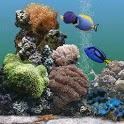 Aquarium Full Of Tropical Fish icon