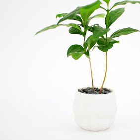 Polygon Planter