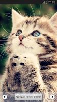Screenshot of Beautiful Cat Wallpapers