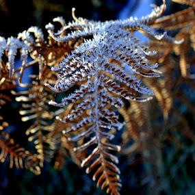 mraz by Jelena Puškarić - Nature Up Close Other Natural Objects (  )