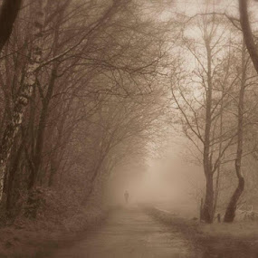 Disappearing through the mist by Kathryn Johnson - Landscapes Weather ( sepia, trees, weather, landscape, spring, mist, , path, nature )
