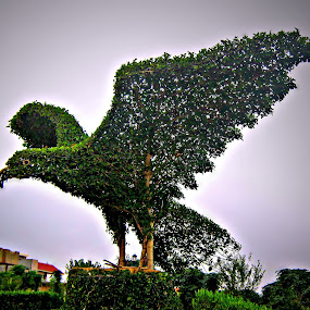 Topiary Eagle by Tamsin Carlisle - City,  Street & Park  City Parks ( eagle, park, wings, bush, kurdistan, topiary, iraq, erbil,  )