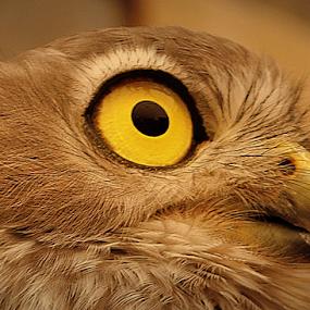 by Dino Rimantho - Animals Birds (  )
