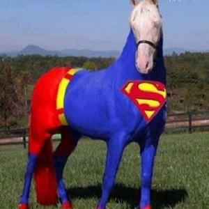Funny horse pictures 娛樂 App LOGO-硬是要APP