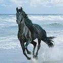 Horse LiveWalpaper icon