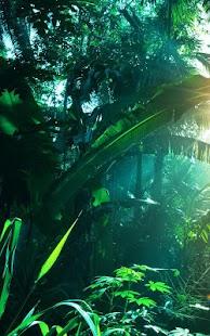 銀河S5叢林動態壁紙 玩個人化App免費 玩APPs