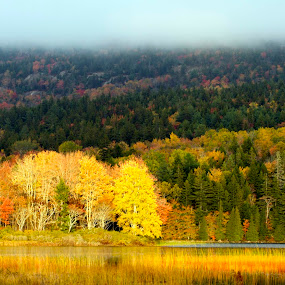 Fall Foliage, Maine by Bala Ve - Landscapes Forests ( fall colors, maine, fall foliage, forest, north east, fall, color, colorful, nature )