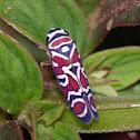 Leafhopper / Saltahojas