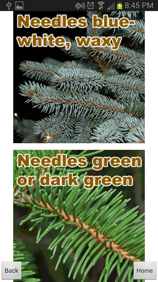 Doug Fir Christmas Tree Guide - screenshot