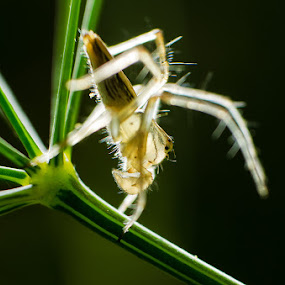 Macro Drama by Anand Lepcha - Animals Insects & Spiders ( macro, nature, spider, beauty, insects, nikon, eyes,  )