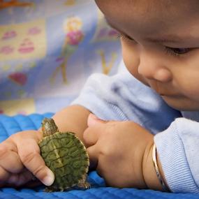 play with little turttle by Sudarmanto Edris - Animals Amphibians ( #showusyourpets, #garyfongpets )