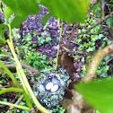 Anna's Hummingbird Nest and Eggs