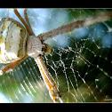 A Spider 3