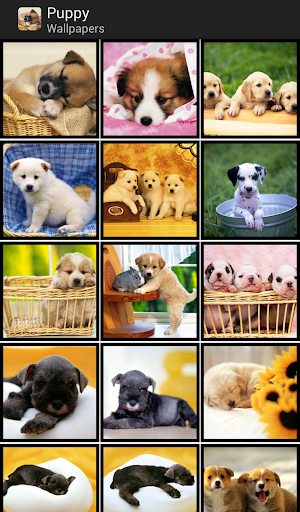 Puppy - HD Wallpapers