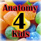 Anatomy4Kids human anatomy icon