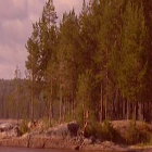 Scenic Lake LWP Pro icon