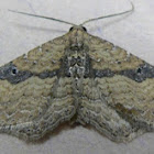 Gem Moth