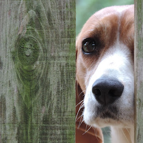 by Michelle Cutt - Animals - Dogs Portraits ( #GARYFONGPETS, #SHOWUSYOURPETS,  )