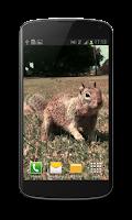 Screenshot of Little Squirrel 3D Wallpaper
